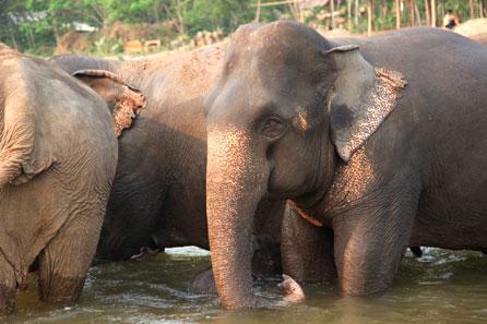 Bom Dia MT Animais que vão viver no Santuário dos Elefantes chegam em MT